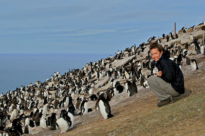 Rockhopper Penguin Colony- Saunders Island, Falkland Islands