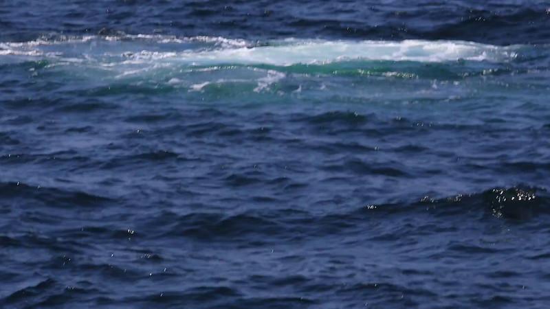 Whale bubble net feeding