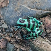 this guy jumped in front of me in the trail.  the colors were shocking at first.  He wants to be seen.