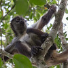 Spider Monkey at Calakmul. This was an unexpected bonus.