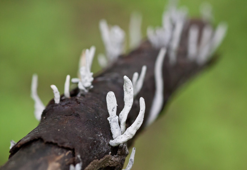 unknown fungus