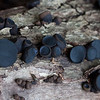 unknown black mushrooms