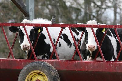 Bristol Agricultural High School Farm