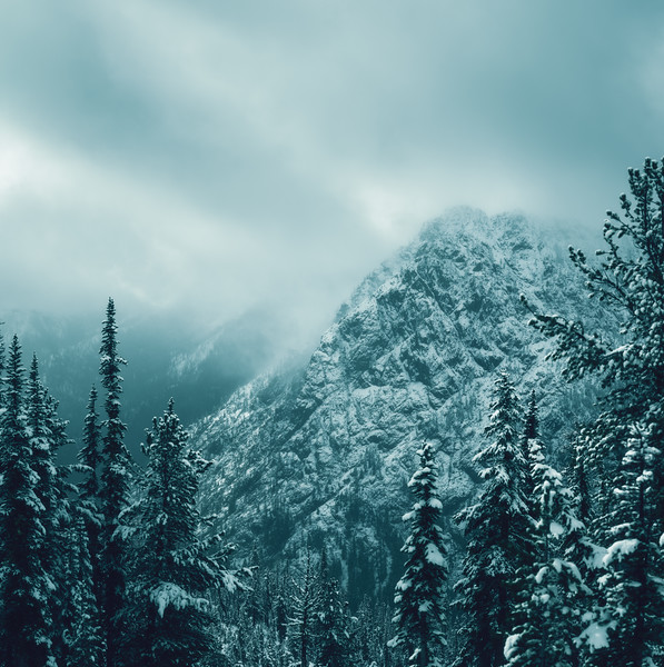 Moody Winter Morning