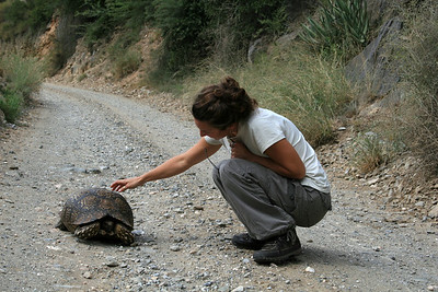 Requesting kindly that the tortoise please move out of the road...  had to carry him off myself!