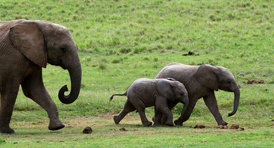 Mom and the kids running to the waterhole.  Addo National Park, South Africa.