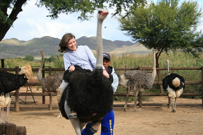 Ostrich Riding in Oudtshoorn.  (no that is not Corrie)