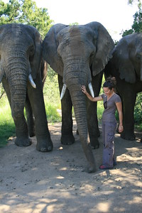 Conversing with one of the bull elephants at ADDO Elephant Back Safaris.