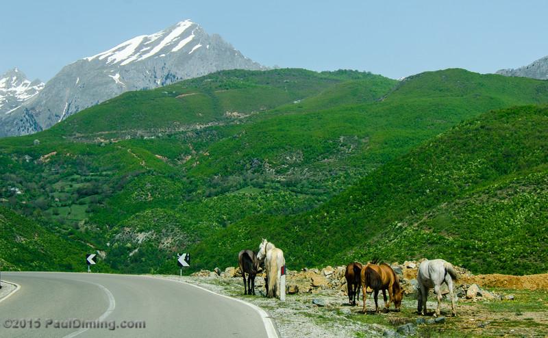 Horses along Rruga Azem Hajdari - Tropoje, Albania