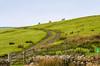 Pasture - Newbiggin - Barnard Castle, England, UK
