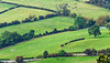 Sheep Pasture @ Sutton Bank - North York Moors National Park, England, UK