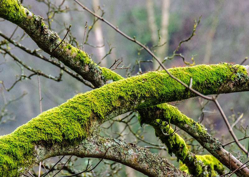 Moss @ High Force - Forest-in-Teesdale, County Durham, England, UK