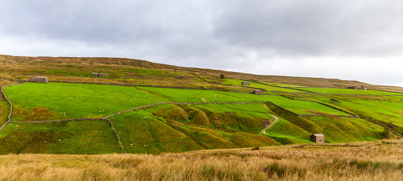 Pastures near West Stonesdale - Muker, North Yorkshire, England, UK