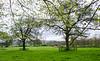 Pasture & Trees @ Batsford Stud - Batsford, Gloucestershire, England, UK