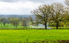 Smoke on the Pasture @ Batsford Stud - Batsford, Gloucestershire, England, UK