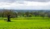 Old Tree & Pastures @ Batsford Stud - Batsford, Gloucestershire, England, UK