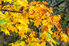 Autumn Leaves - Keswick, England - by Paul Diming