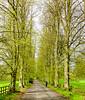 The Road to Dorn @ Batsford Stud - Batsford, Gloucestershire, England, UK