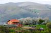 Mountain Orchard - Brus, Kosovo
