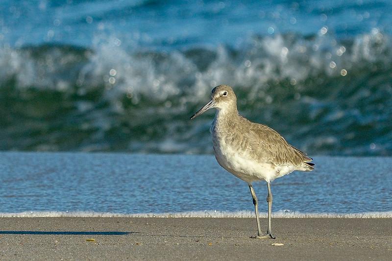 Willet & Wave - Gulf Shores, AL