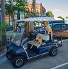 Beach Dogs - Apalachicola, FL