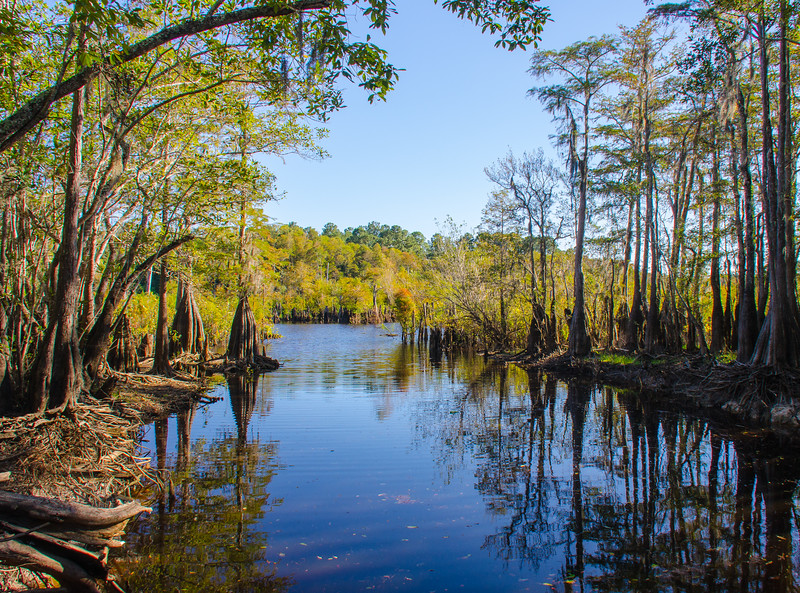 Boat Ramp @ Dead Lakes State Recreation Area - Wewahitchka, FL