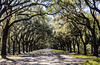 Wormsloe Road @ Wormsloe Historic Site - Savannah, GA