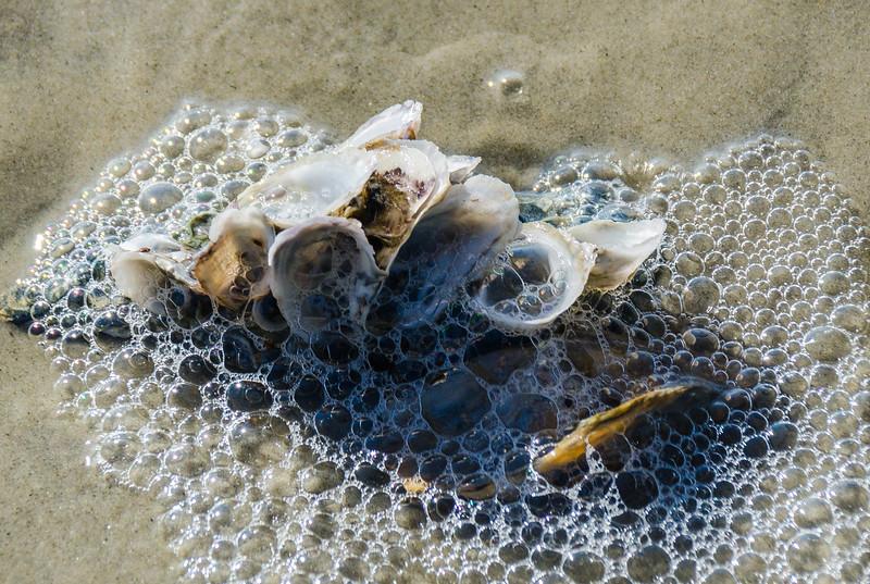 Sea Shells on St. Andrews Beach - Jekyll Island, GA