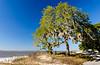 Live Oak & Spanish Moss on St. Andrews Beach - Jekyll Island, GA
