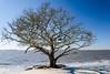 Dead Tree on St. Andrews Beach - Jekyll Island, GA