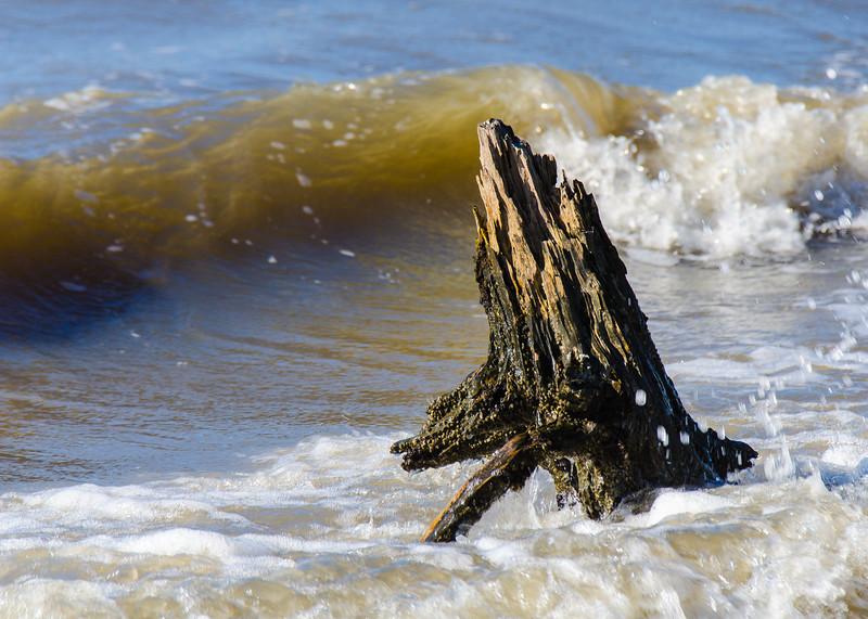 Stump on St. Andrews Beach - Jekyll Island, GA