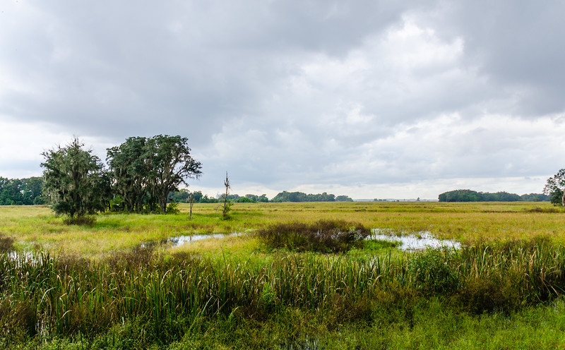 Wetlands @ Savannah National Wildlife Refuge - Savannah, GA