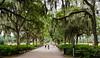 Live Oaks @ Forsyth Park c. 1840 - Savannah, GA