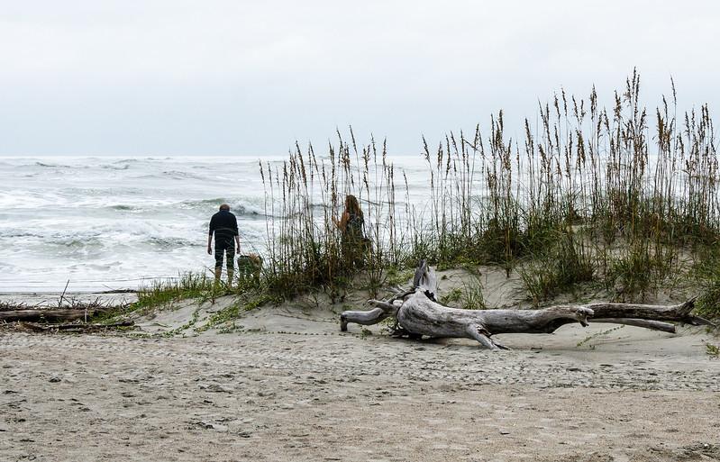 Driftwood @ Little Tybee Island Beach - Tybee Island, GA