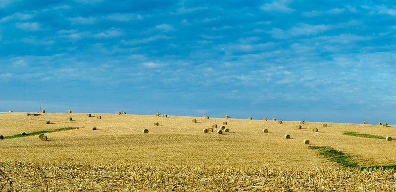 Cornfield in Kellogg, MN - by Paul Diming