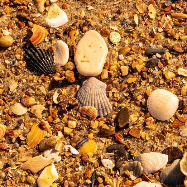 Sea Shells - Avon, NC, USA