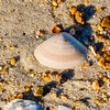 Clam Shell @ ORV Ramp 27 - Avon, NC