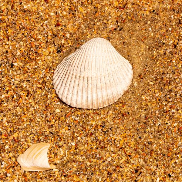 Sea Shell 2 - Avon, NC, USA