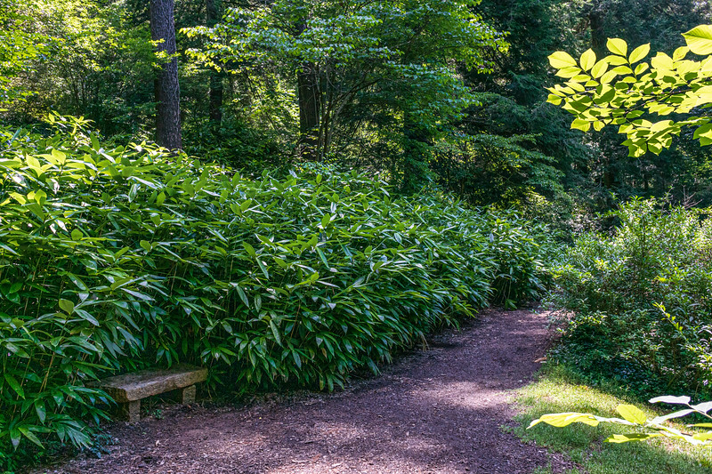 Shaded Path & Bench in the Spring Garden @ Biltmore Estate - Asheville, NC