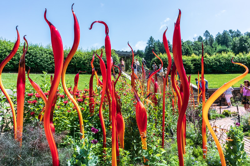 Cattails and Copper Birch Reeds 2, 2015 by Dale Chihuly, American, b. 1941  in the Rose Garden @ Biltmore Estate - Asheville, NC