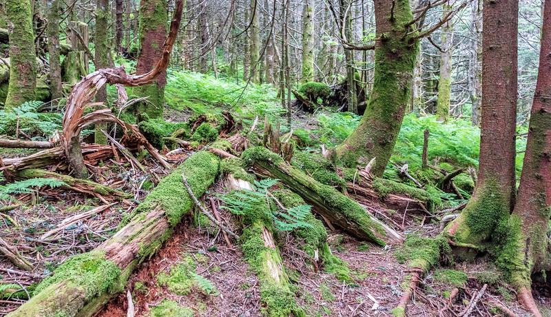 Moss & Ferns @ Mt Mitchell State Park - Yancey County, NC