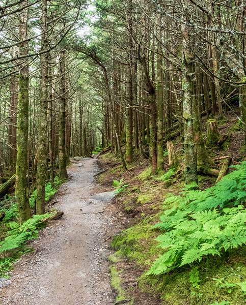 Balsam Nature Trail @ Mt Mitchell State Park - Yancey County, NC
