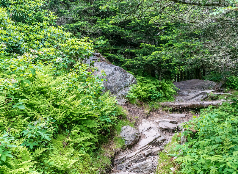 Mountain Trail @ Mt Mitchell State Park - Yancey County, NC