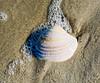 Sea Shell @ ORV Ramp 70 - Ocracoke, NC