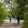 Fig Tree Lane - Ocracoke, NC, USA