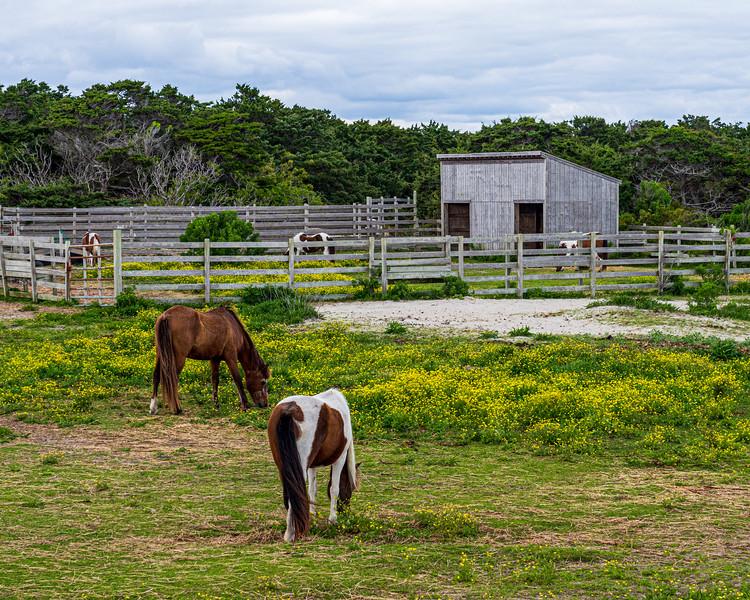Pony Pens - Ocracoke, NC, USA
