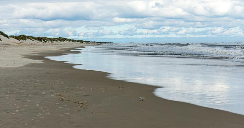 Low Tide @ Pony Pens Beach - Ocracoke, NC, USA