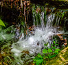 Tiny Waterfall on Moore Cove Trail in Pisgah National Forest - Brevard, NC