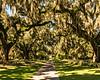 Live Oak Allée 2 @ Brookgreen Gardens - Murrells Inlet, SC, USA