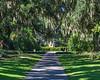 Live Oak Allée 1 @ Brookgreen Gardens - Murrells Inlet, SC, USA